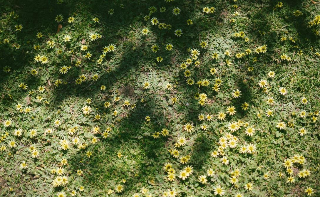 Rasen mit Schatten